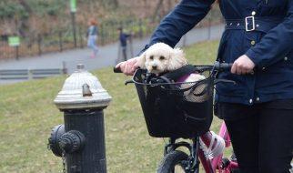 Kosze rowerowe do przewozu zwierząt